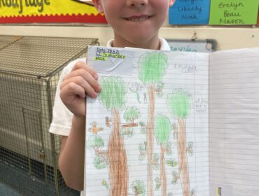 We drew pictures to show the different layers of rain forest.